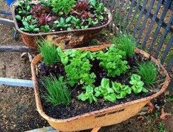 Create awesome planters using RECYCLED wheelbarrows!