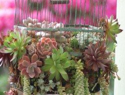Have you got an old bird cage that has seen better days?  Why not create a hanging planter using succulents (those plants we sometimes mention that thrive on neglect and minimal water).
