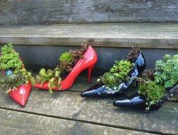 Here's another 'creative or silly' one. What do you think? Succulent shoes???  Got an opinion on this? Why not comment, LIKE and SHARE?