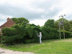 75-year-old John Brooker spent 13 years transforming a boring hedge into a 150ft-long (45.7m) giant dragon. How cool is that!