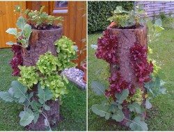 It's vertical gardening. It's recycling. It's growing your own food.