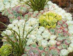This is such a great example of succulents at work. If you haven't heard of them, they thrive on neglect, poor soil and minimal water. What more do you want in a plant?