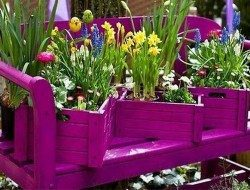Instant colour for the smallest of gardens