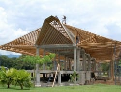 Still Baboozled?  Simon Velez is recognised as being at the forefront of modern bamboo building methods. Here is an example of his work.  The bamboo species is Guadua angustifolia, the same species I mentioned below. It has incredible strength and is also highly resistant to insect attack.
