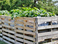 Pallet Vegetables Garden and Safety Fence - 99 Pallets