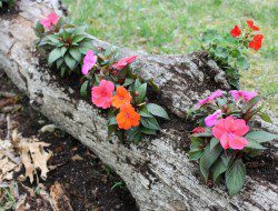 Re-Purposed Tree Log Planter - Paint Speckled Pawprints