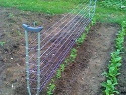 Trellis made from old crutches.