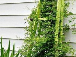 Trellis made from old ladders.