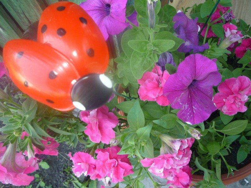 Garden Ladybird Made From Recycled Plastic Spoons