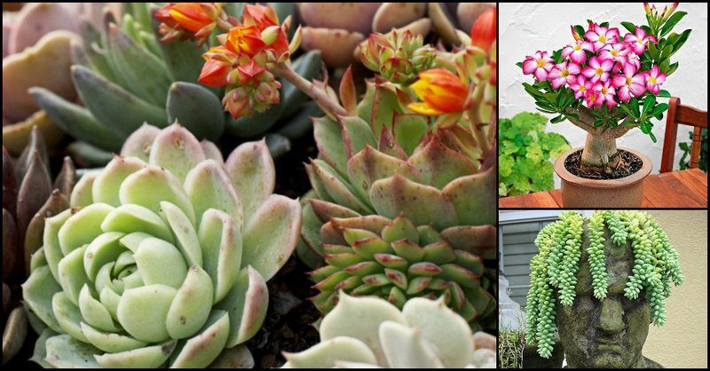Houseplants That Can Survive Your Constant Neglect