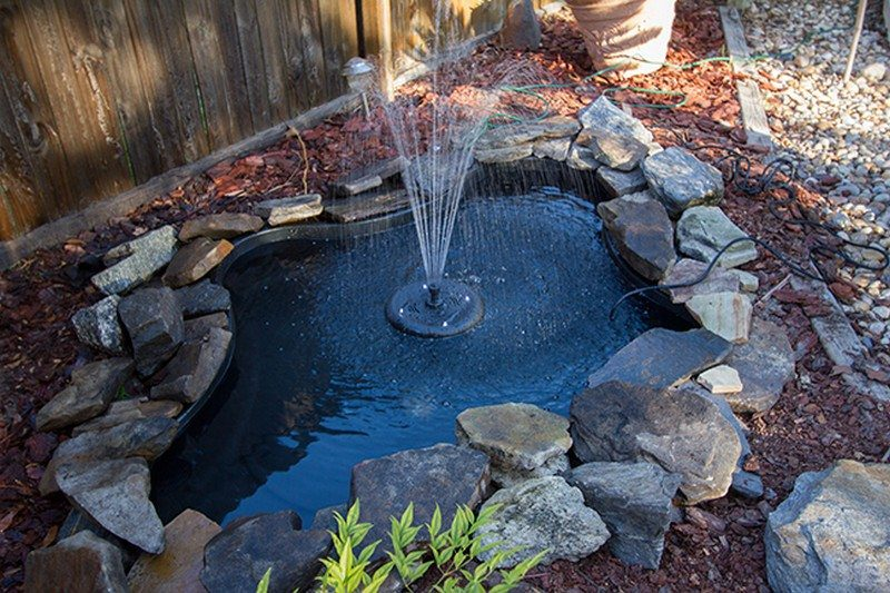 Backyard Ponds and Aquariums