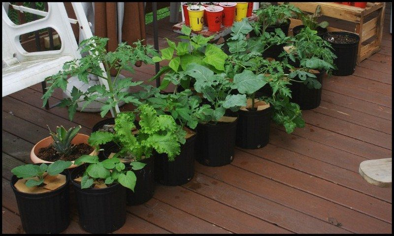 Vegetables That Grow Well in a Container or Pot