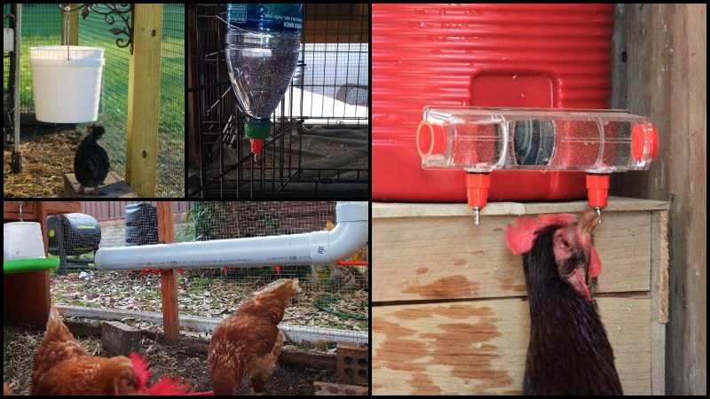 Chicken Water Station Ideas Main Image