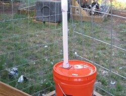 Chicken Waterer Ideas