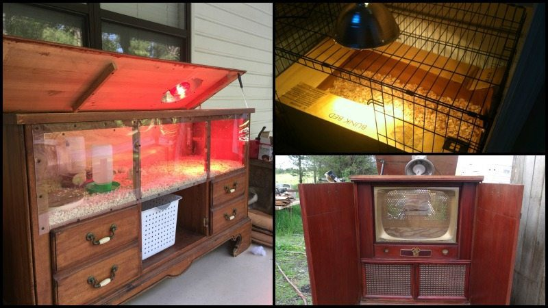 Clever Chick Brooder Ideas Main Image