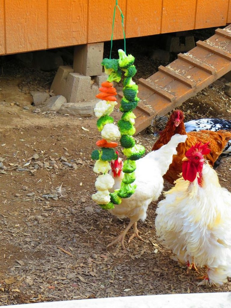 Healthy Homemade Treats For Chickens