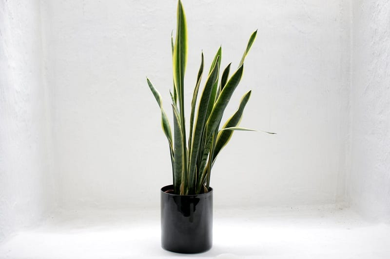 You may need to move your plants around to find the ideal light.