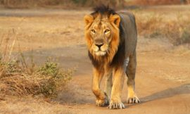 Can tourism save these five animals from extinction?