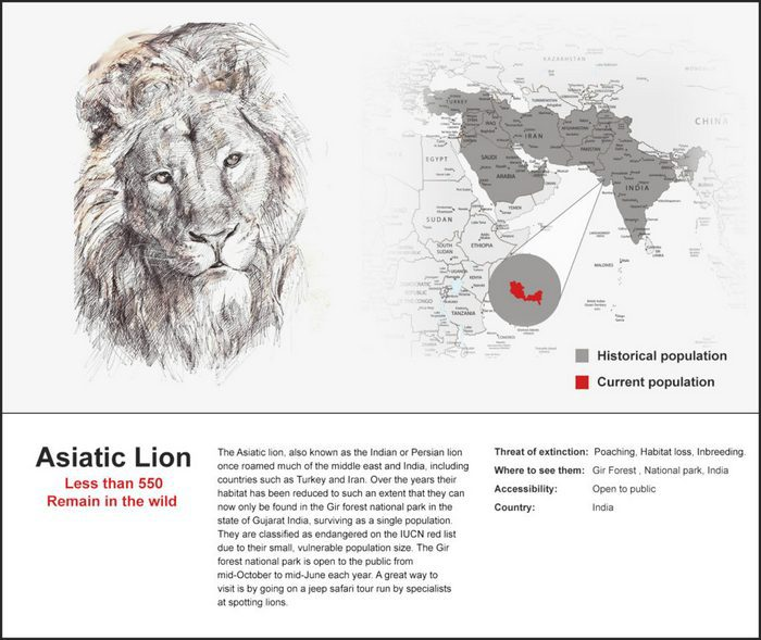 The Asiatic Lion can now only be found in the Gir Forest, located in Gujarat, India.