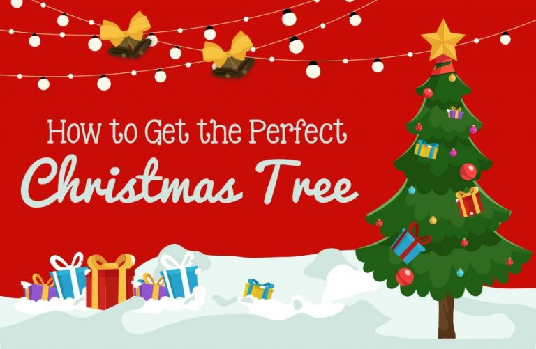 How to Pick the Perfect Christmas Tree for Your Home!