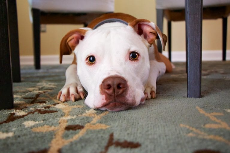 10 Things You Do Your Dog Struggles To Understand