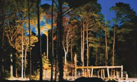 A House Among and Within the Loblolly Pines
